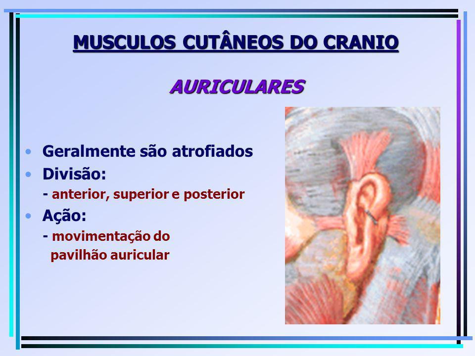 Geralmente são atrofiados Divisão: - anterior, superior e posterior Ação: - movimentação do pavilhão auricular MUSCULOS CUTÂNEOS DO CRANIO AURICULARES