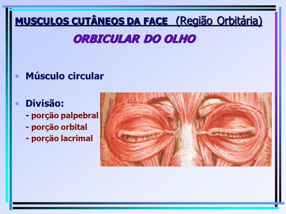 MUSCULOS CUTÂNEOS DA FACE (Região Orbitária) ORBICULAR DO OLHO Músculo circular Divisão: - porção palpebral - porção orbital - porção lacrimal