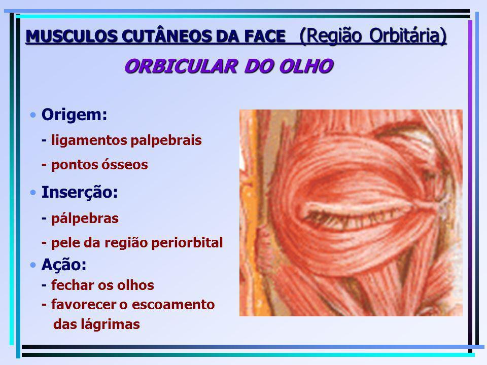 MUSCULOS CUTÂNEOS DA FACE (Região Orbitária) ORBICULAR DO OLHO Origem: - ligamentos palpebrais - pontos ósseos Inserção: - pálpebras - pele da região