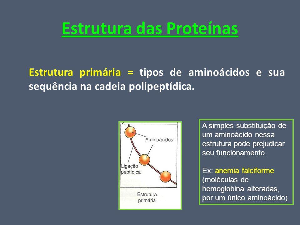 Estrutura das Proteínas Estrutura primária = tipos de aminoácidos e sua sequência na cadeia polipeptídica. A simples substituição de um aminoácido nes