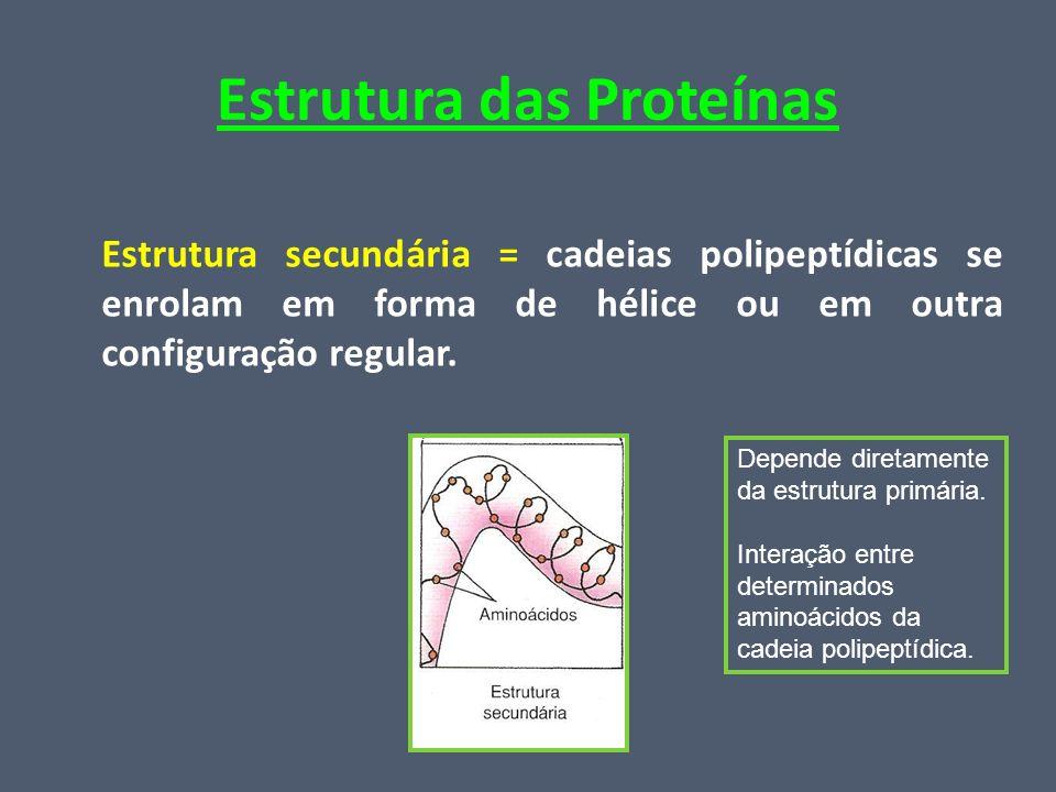 Estrutura das Proteínas Estrutura secundária = cadeias polipeptídicas se enrolam em forma de hélice ou em outra configuração regular. Depende diretame