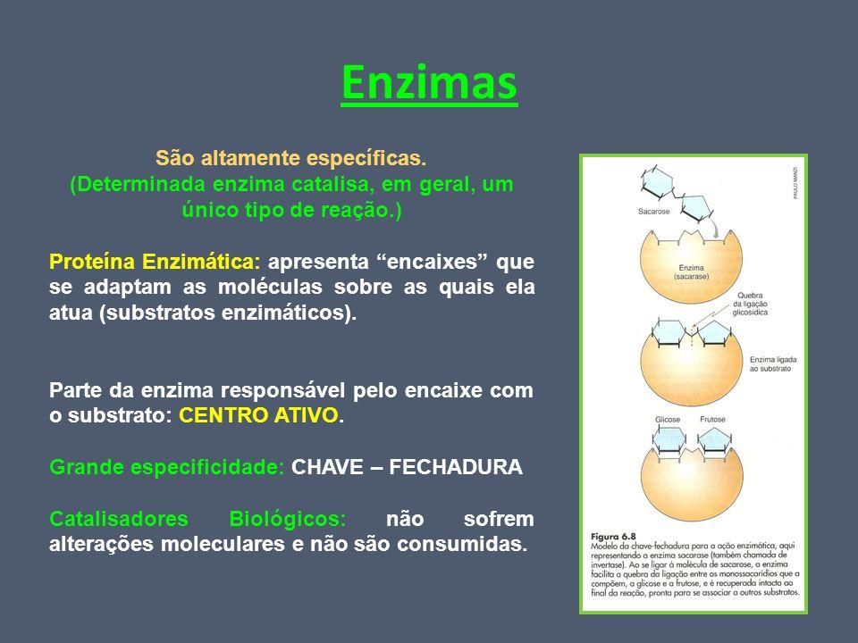 Enzimas São altamente específicas. (Determinada enzima catalisa, em geral, um único tipo de reação.) Proteína Enzimática: apresenta encaixes que se ad