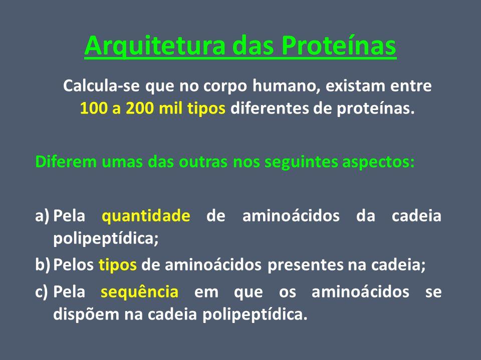 Arquitetura das Proteínas Calcula-se que no corpo humano, existam entre 100 a 200 mil tipos diferentes de proteínas. Diferem umas das outras nos segui