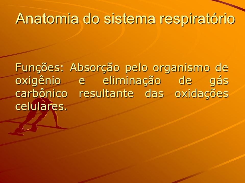Divisão anatômica e funcional: Porção condutora: Nariz, faringe, laringe, traquéia, brônquios principais, brônquios lobares, brônquios segmentares e bronquíolos terminais.