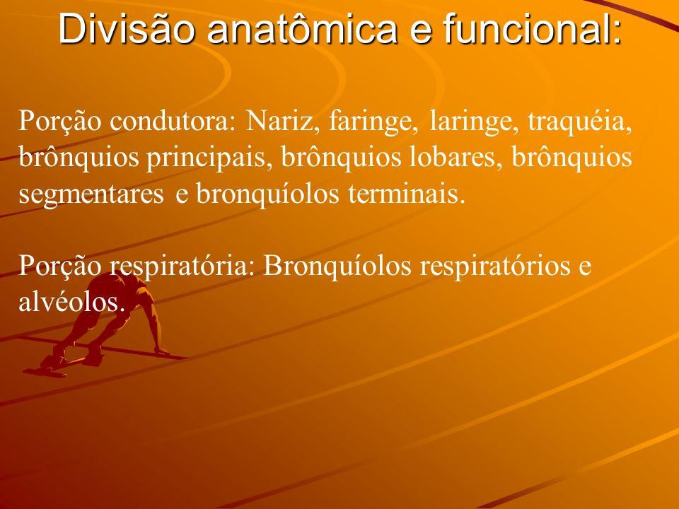 Nariz Nariz externo: Raiz, dorso, ápice e base (narinas).