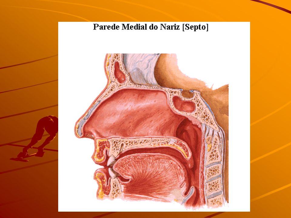 Laringe Funções: Via aerífera e fonação Constituição: Estrutura constituída basicamente por cartilagens e ligamentos.