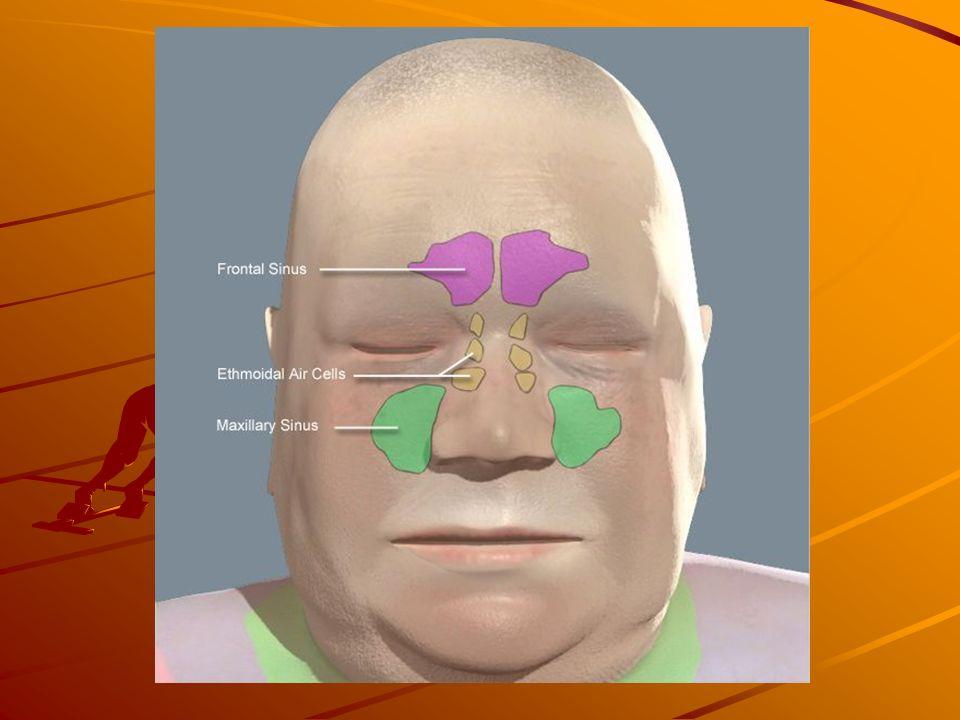 Pulmões Localização: Pleura parietal, pleura visceral e cavidade pleural (espaço virtual por onde circula o líquido pleural).