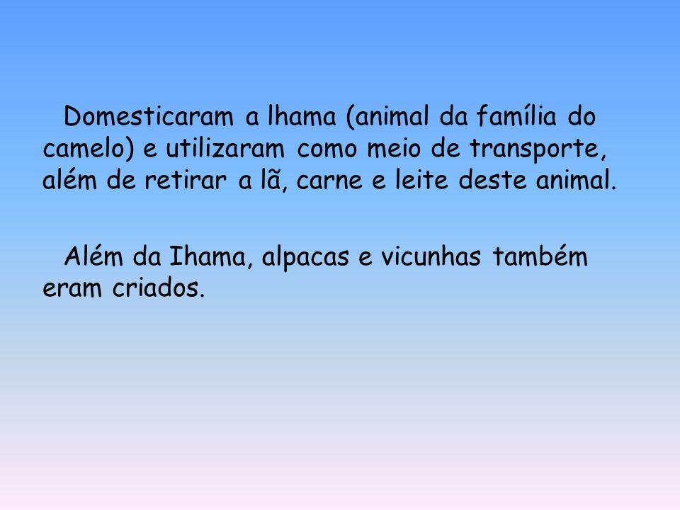 Domesticaram a lhama (animal da família do camelo) e utilizaram como meio de transporte, além de retirar a lã, carne e leite deste animal. Além da Iha