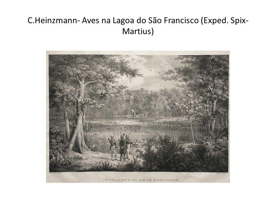 C.Heinzmann- Aves na Lagoa do São Francisco (Exped. Spix- Martius)