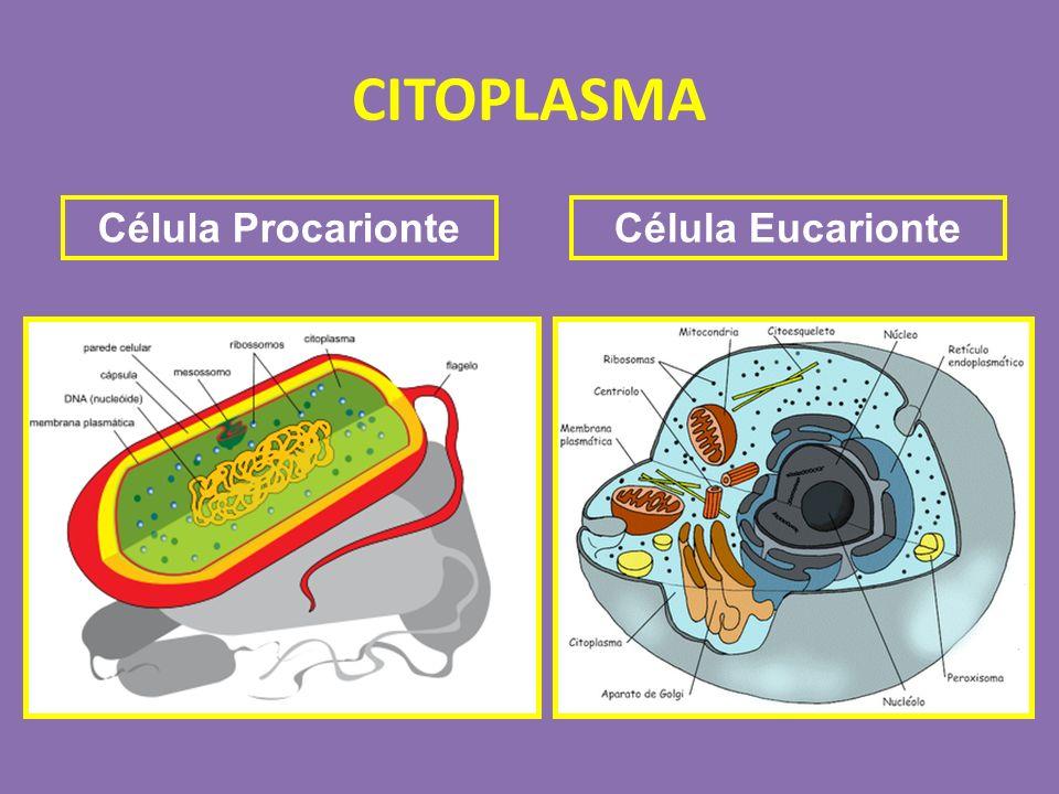 Célula EucarionteCélula Procarionte