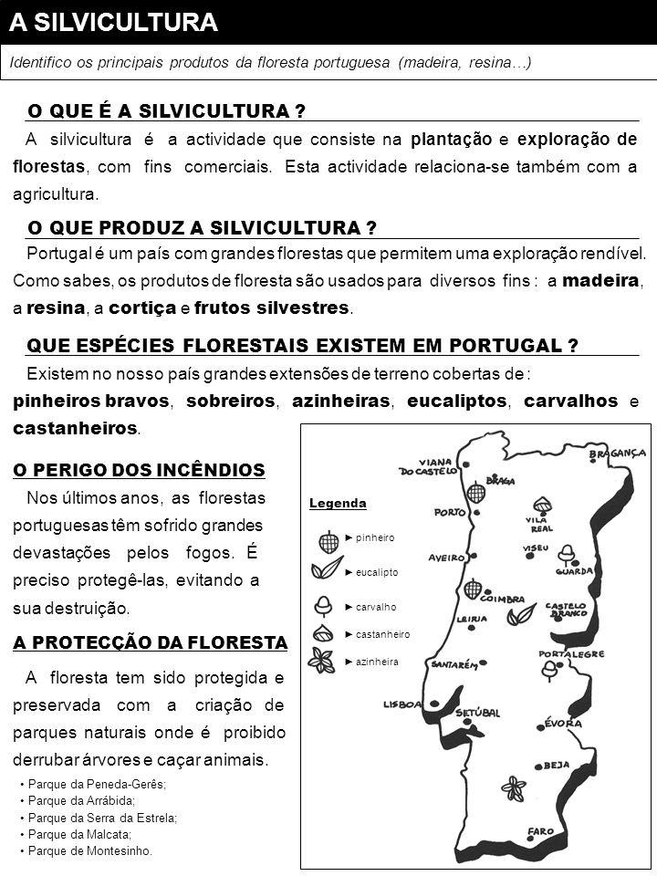 A SILVICULTURA Identifico os principais produtos da floresta portuguesa (madeira, resina…) A silvicultura é a actividade que consiste na plantação e e