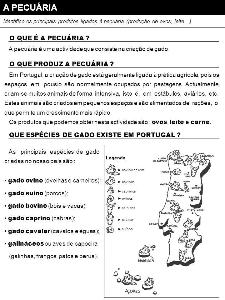 A PESCA Identifico as principais espécies de peixe e portos de pesca existentes em Portugal.