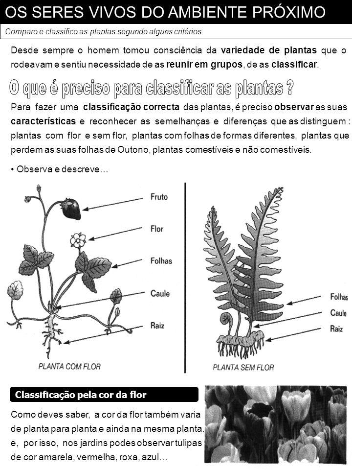 OS SERES VIVOS DO AMBIENTE PRÓXIMO Comparo e classifico as plantas segundo alguns critérios. Para fazer uma classificação correcta das plantas, é prec