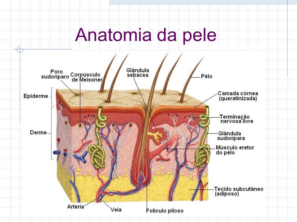 Úlcera de Pressão Úlcera de Decúbito Feridas de Pressão Úlceras de Leito Escara de Decúbito