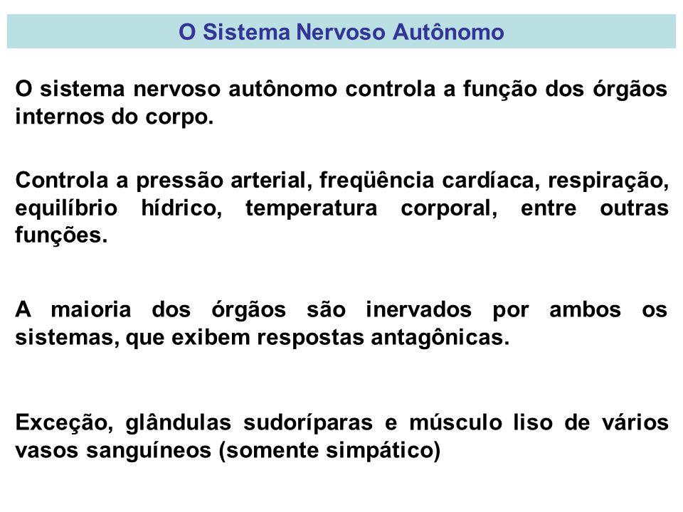 O Sistema Nervoso Autônomo O sistema nervoso autônomo controla a função dos órgãos internos do corpo.