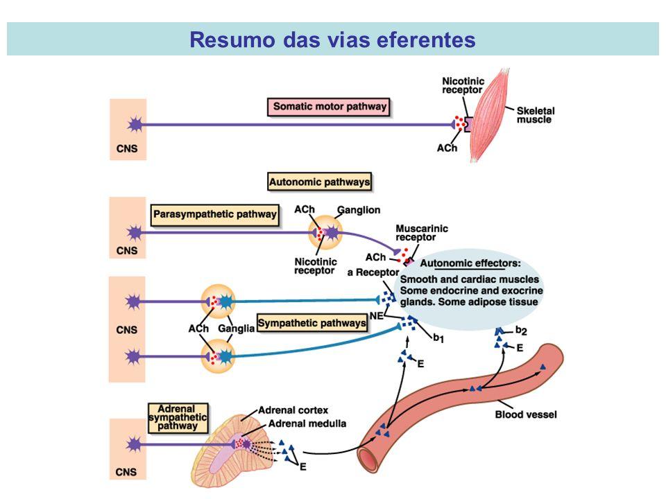 Resumo das vias eferentes