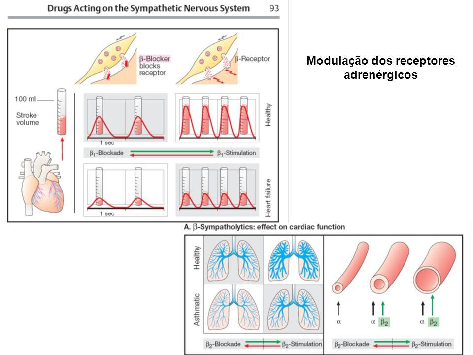 Modulação dos receptores adrenérgicos
