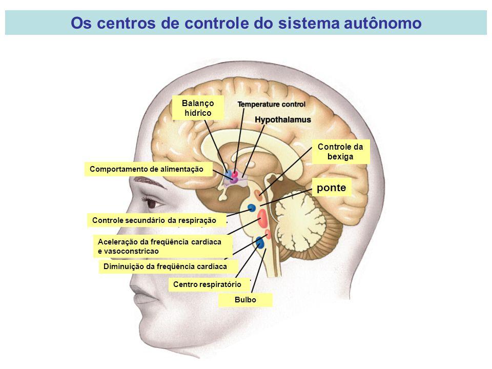 ponte Controle da bexiga Balanço hídrico Comportamento de alimentação Controle secundário da respiração Aceleração da freqüência cardíaca e vasoconstricao Diminuição da freqüência cardíaca Centro respiratório Bulbo Os centros de controle do sistema autônomo