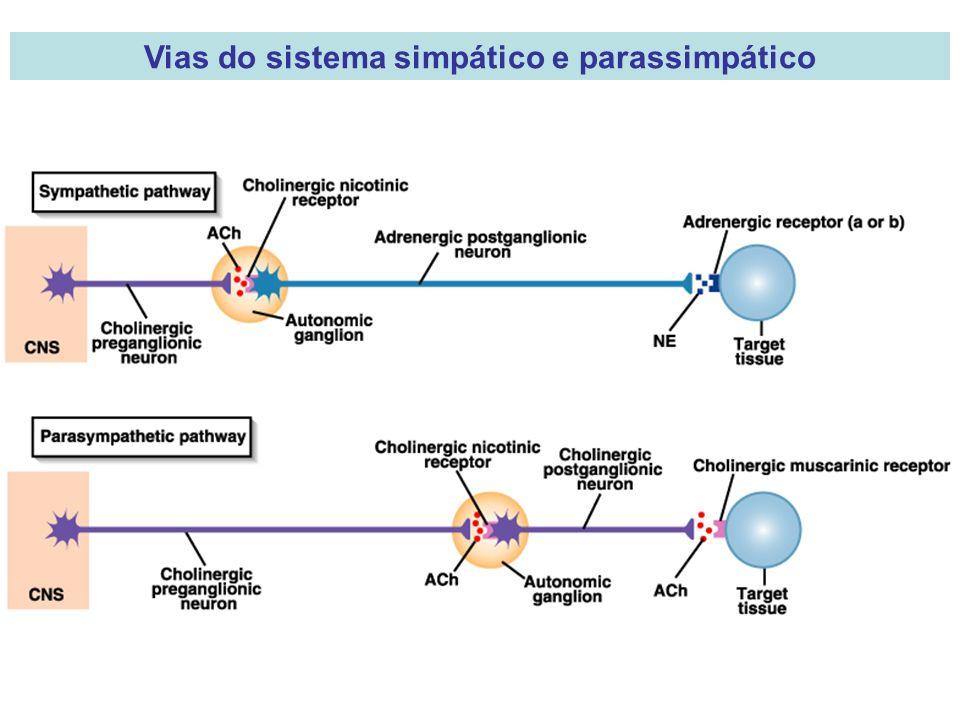 Vias do sistema simpático e parassimpático