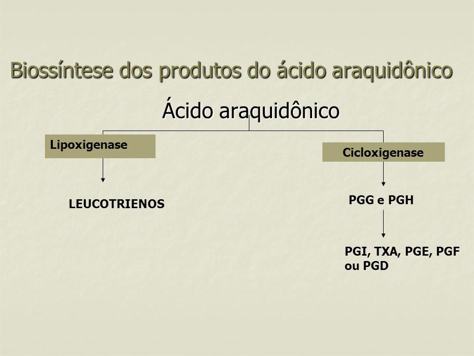 Ácido araquidônico Biossíntese dos produtos do ácido araquidônico Lipoxigenase Cicloxigenase PGG e PGH PGI, TXA, PGE, PGF ou PGD LEUCOTRIENOS