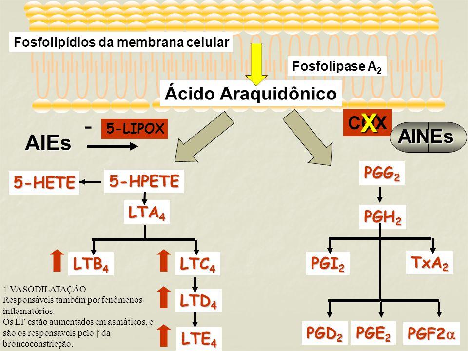 Fosfolipídios da membrana celular Fosfolipase A 2 Ácido Araquidônico TxA 2 PGI 2 PGD 2 PGE 2 PGF2 PGF2 PGG 2 PGH 2 COXAINEsX 5-LIPOX 5-HPETE LTA 4 LTB 4 LTC 4 LTE 4 LTD 4 5-HETE VASODILATAÇÃO Responsáveis também por fenômenos inflamatórios.