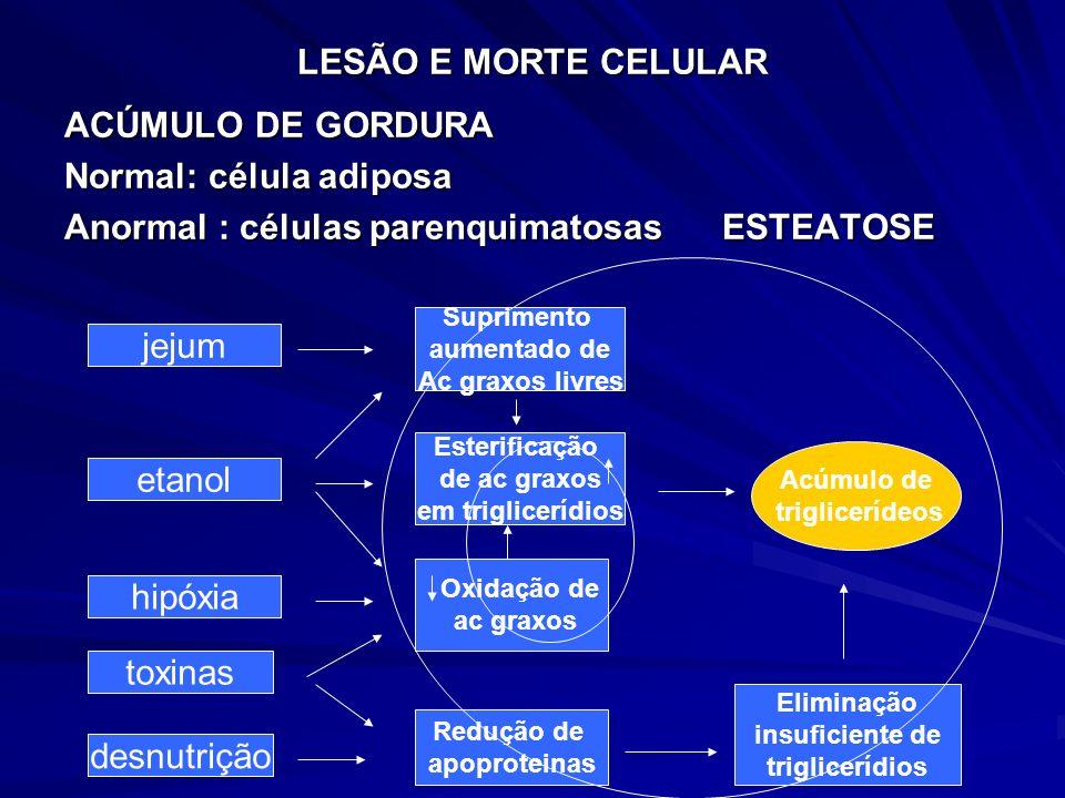 LESÃO E MORTE CELULAR ACÚMULO DE GORDURA Normal: célula adiposa Anormal : células parenquimatosas ESTEATOSE jejum etanol hipóxia toxinas desnutrição S