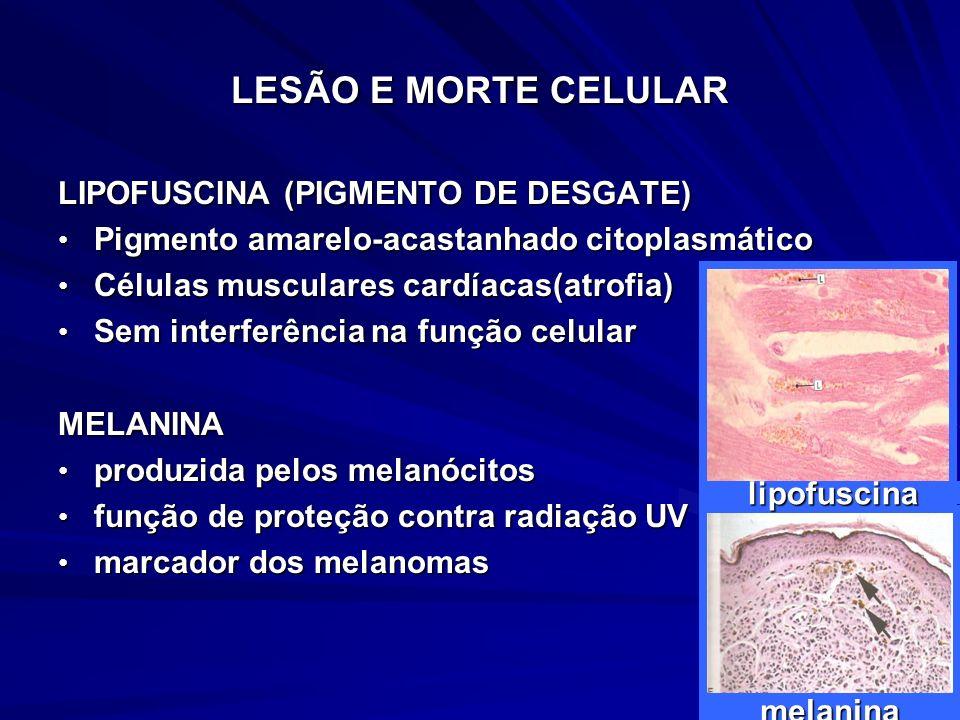 LESÃO E MORTE CELULAR LIPOFUSCINA (PIGMENTO DE DESGATE) Pigmento amarelo-acastanhado citoplasmático Pigmento amarelo-acastanhado citoplasmático Célula