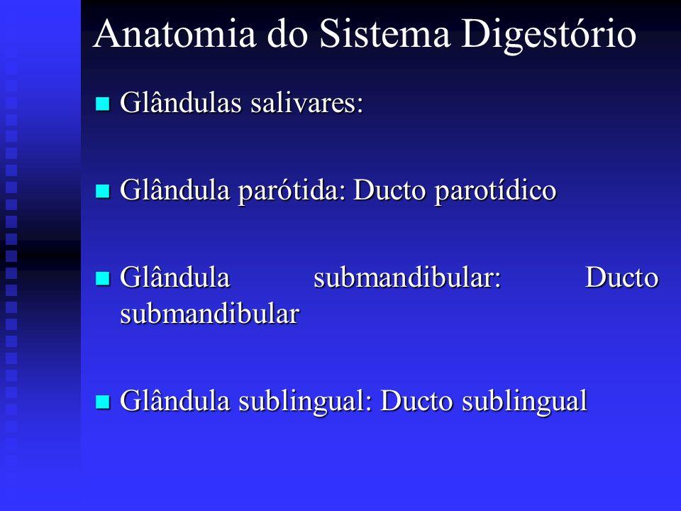 Anatomia do Sistema Digestório Glândulas salivares: Glândulas salivares: Glândula parótida: Ducto parotídico Glândula parótida: Ducto parotídico Glând