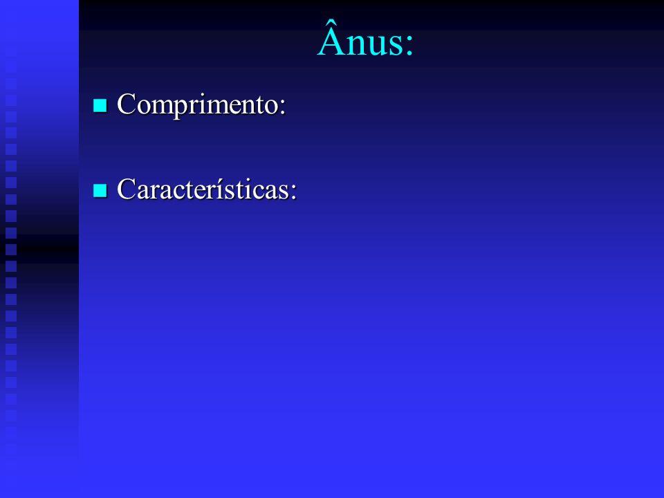 Ânus: Comprimento: Comprimento: Características: Características: