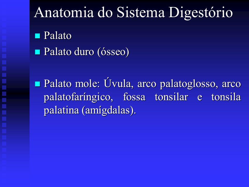 Anatomia do Sistema Digestório Palato Palato Palato duro (ósseo) Palato duro (ósseo) Palato mole: Úvula, arco palatoglosso, arco palatofaríngico, foss