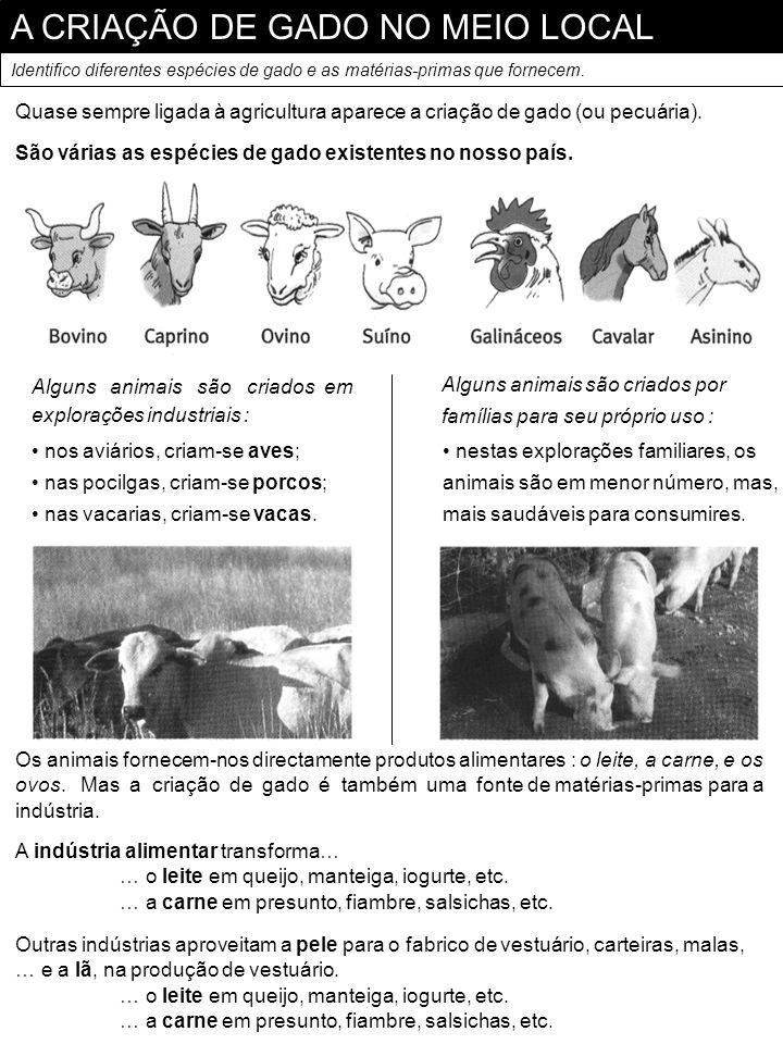 A CRIAÇÃO DE GADO NO MEIO LOCAL Identifico diferentes espécies de gado e as matérias-primas que fornecem. Quase sempre ligada à agricultura aparece a