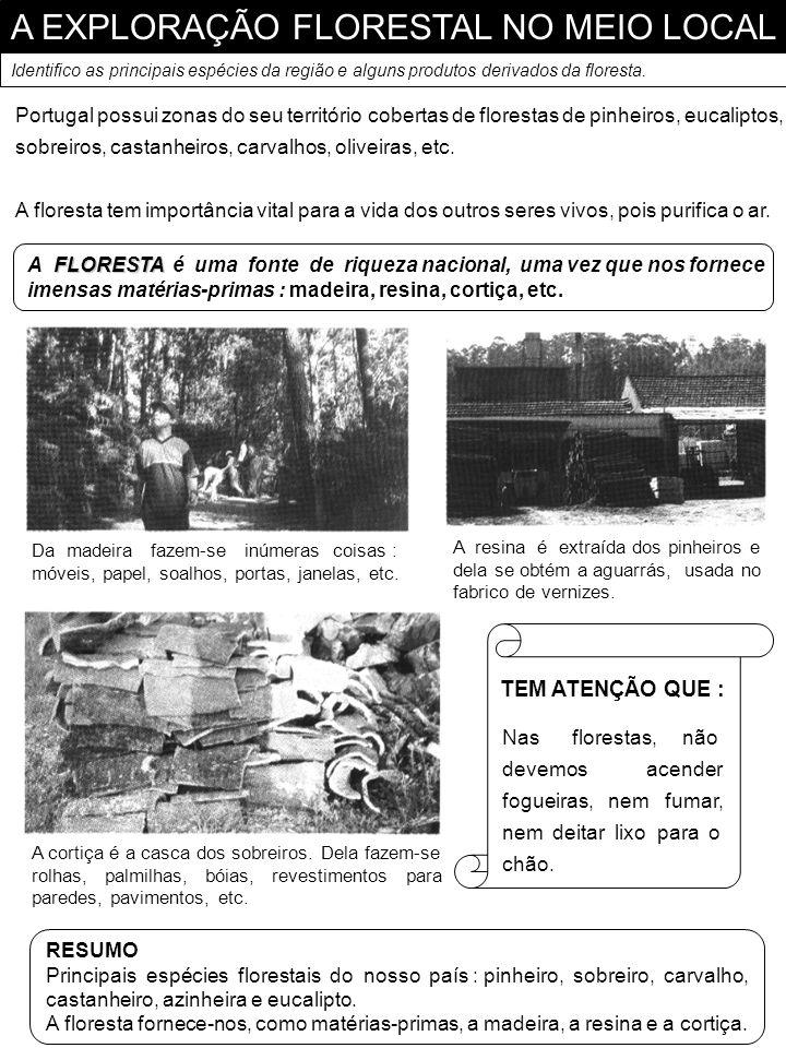 A EXPLORAÇÃO FLORESTAL NO MEIO LOCAL Identifico as principais espécies da região e alguns produtos derivados da floresta. Portugal possui zonas do seu