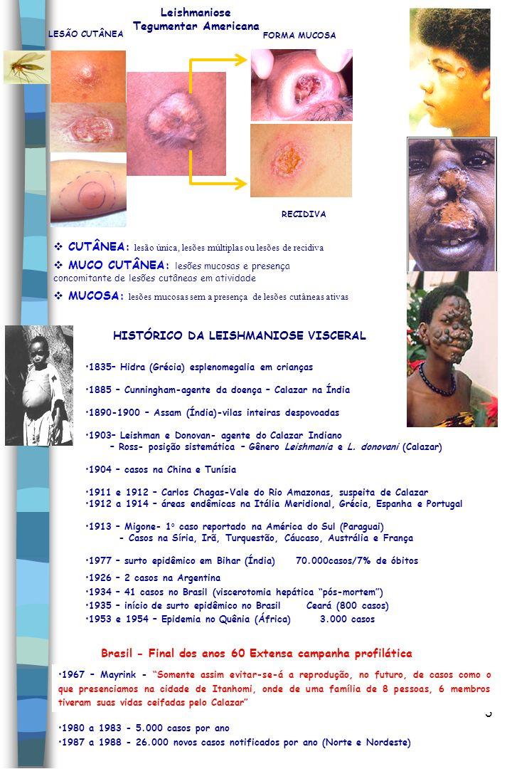 4 Espécies viscerotrópicas do Novo Mundo Subgênero Leishmania complexo L.