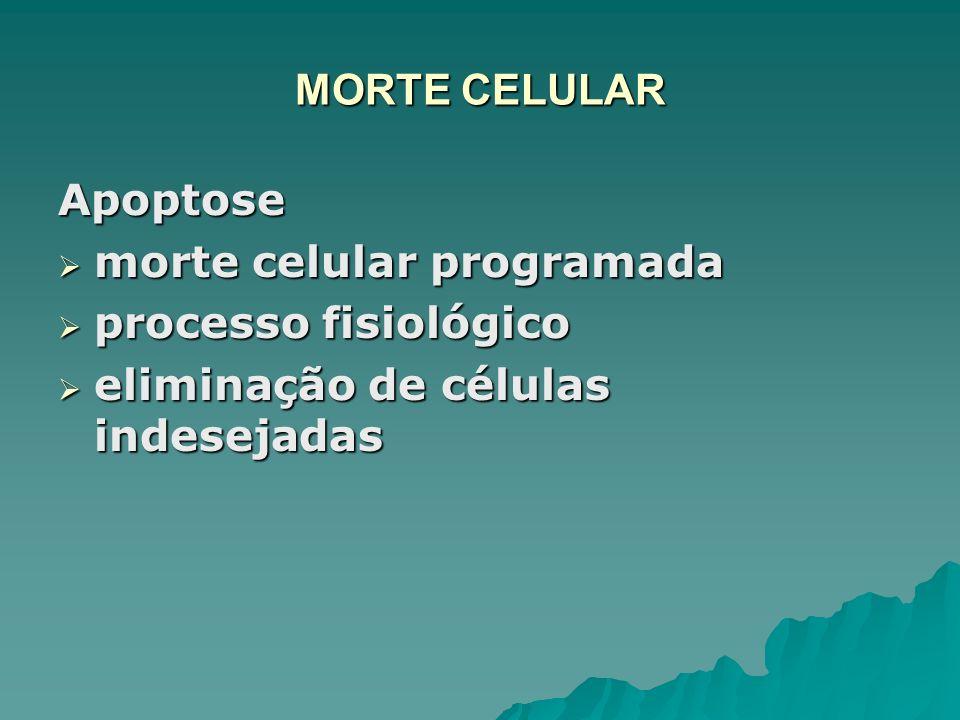 MORTE CELULAR Apoptose morte celular programada morte celular programada processo fisiológico processo fisiológico eliminação de células indesejadas e