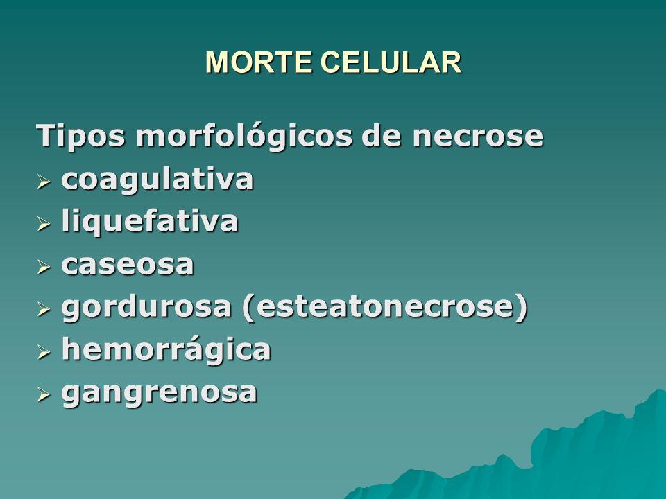 MORTE CELULAR Tipos morfológicos de necrose coagulativa coagulativa liquefativa liquefativa caseosa caseosa gordurosa (esteatonecrose) gordurosa (este