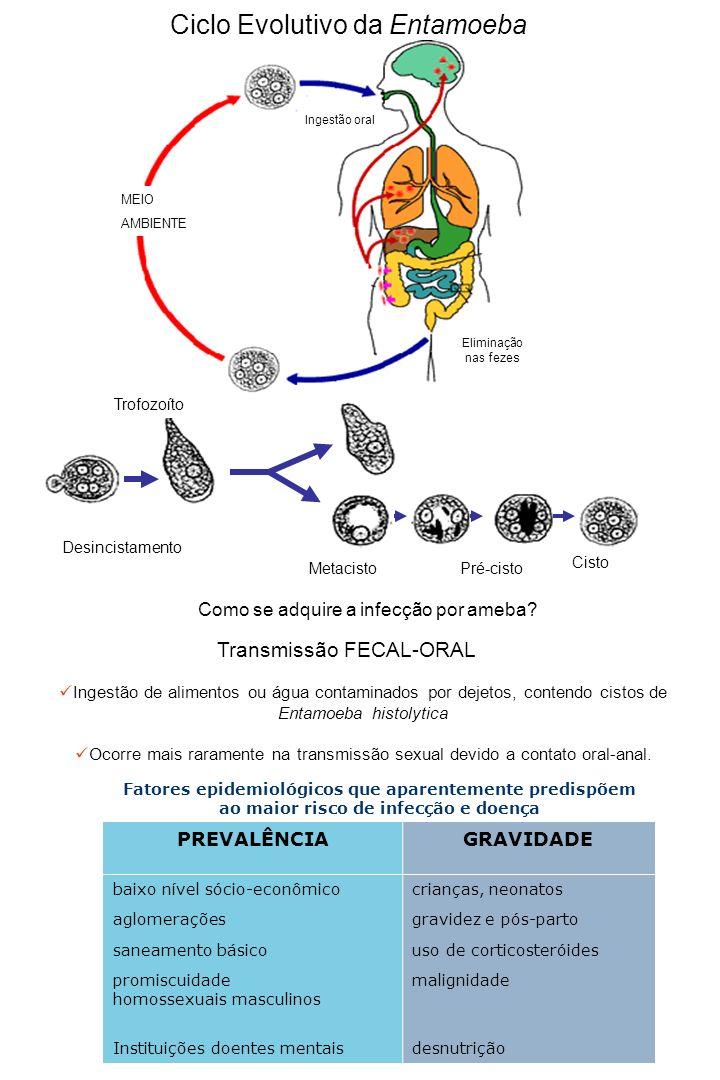 Manifestações Clínicas Formas assintomáticas: 80 a 90% dos casos Eliminam cistos de Entamoeba histolytica nas fezes Formas sintomáticas: Colites Não Disentéricas Diarréia intermitente Fezes moles ou pastosas, às vezes com muco ou sangue Desconforto abdominal Colites Disentéricas Diarréia com 8 a 10 evacuações por dia, ou mais Fezes mucossanguinolentas Cólica intestinal ou tenesmo Febre moderada Amebíase Extraintestinal Infiltrado inflamatório Amebíase Intestinal Ulcerações no cólon Abscesso hepático Abscesso Pulmonar Abscesso cerebral Amebíase Extra Intestinal Entamoeba histolytica - FAGOCITOSE 20000 x PATOGENICIDADEVIRULÊNCIA capacidade em produzir doença incondicionalmente capacidade em produzir doença em determinadas condições E.