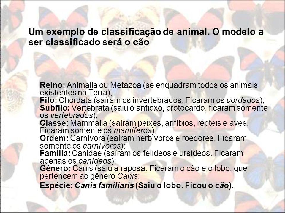 Um exemplo de classificação de animal. O modelo a ser classificado será o cão Reino: Animalia ou Metazoa (se enquadram todos os animais existentes na