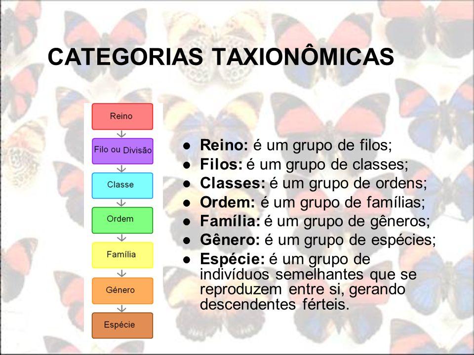 CATEGORIAS TAXIONÔMICAS Reino: é um grupo de filos; Filos: é um grupo de classes; Classes: é um grupo de ordens; Ordem: é um grupo de famílias; Famíli