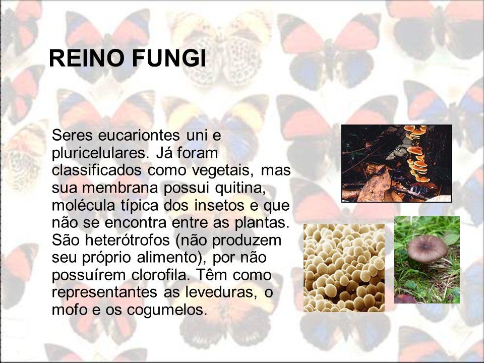 REINO FUNGI Seres eucariontes uni e pluricelulares. Já foram classificados como vegetais, mas sua membrana possui quitina, molécula típica dos insetos