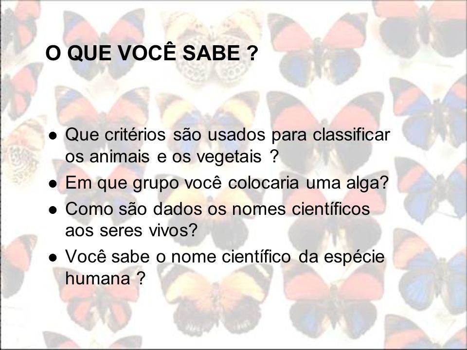 7.Organize a classificação do ser humano seguindo a ordem das categorias taxonômicas.