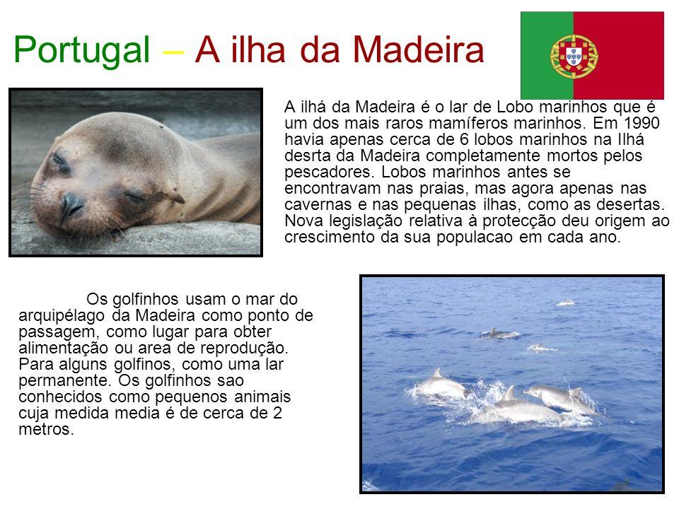Portugal – A ilha da Madeira A ilhá da Madeira é o lar de Lobo marinhos que é um dos mais raros mamíferos marinhos. Em 1990 havia apenas cerca de 6 lo