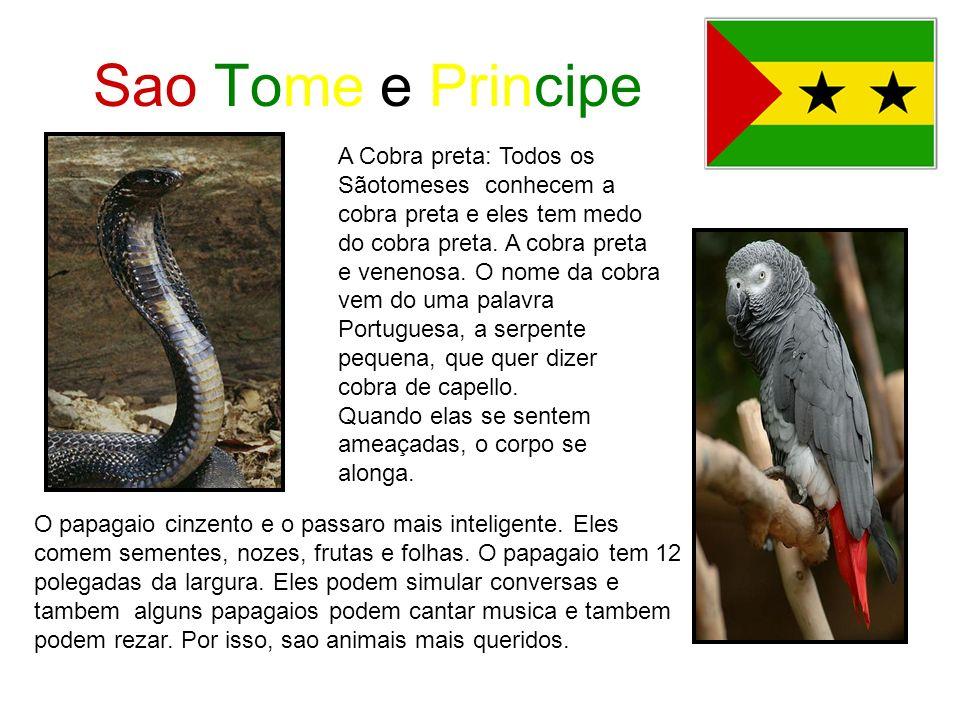 Sao Tome e Principe A Cobra preta: Todos os Sãotomeses conhecem a cobra preta e eles tem medo do cobra preta. A cobra preta e venenosa. O nome da cobr