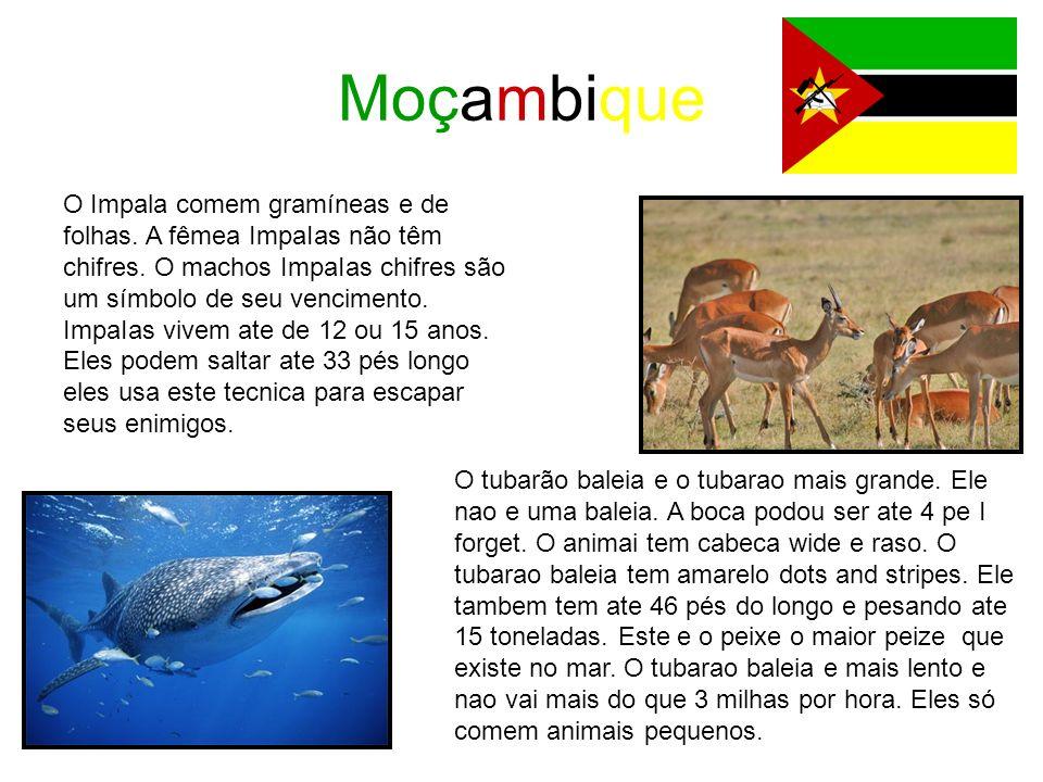 Moçambique O Impala comem gramíneas e de folhas. A fêmea ImpaIas não têm chifres. O machos ImpaIas chifres são um símbolo de seu vencimento. ImpaIas v