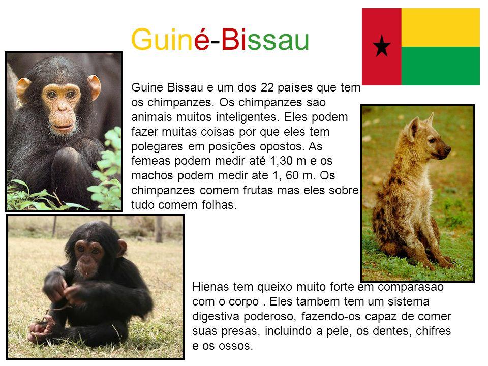 Guiné-Bissau Guine Bissau e um dos 22 países que tem os chimpanzes. Os chimpanzes sao animais muitos inteligentes. Eles podem fazer muitas coisas por