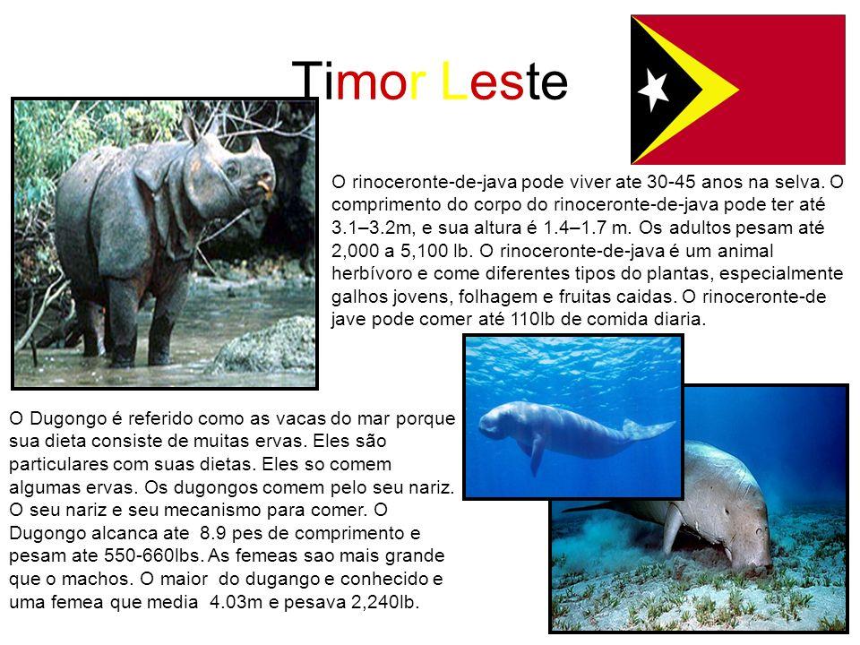 Timor Leste O Dugongo é referido como as vacas do mar porque sua dieta consiste de muitas ervas. Eles são particulares com suas dietas. Eles so comem