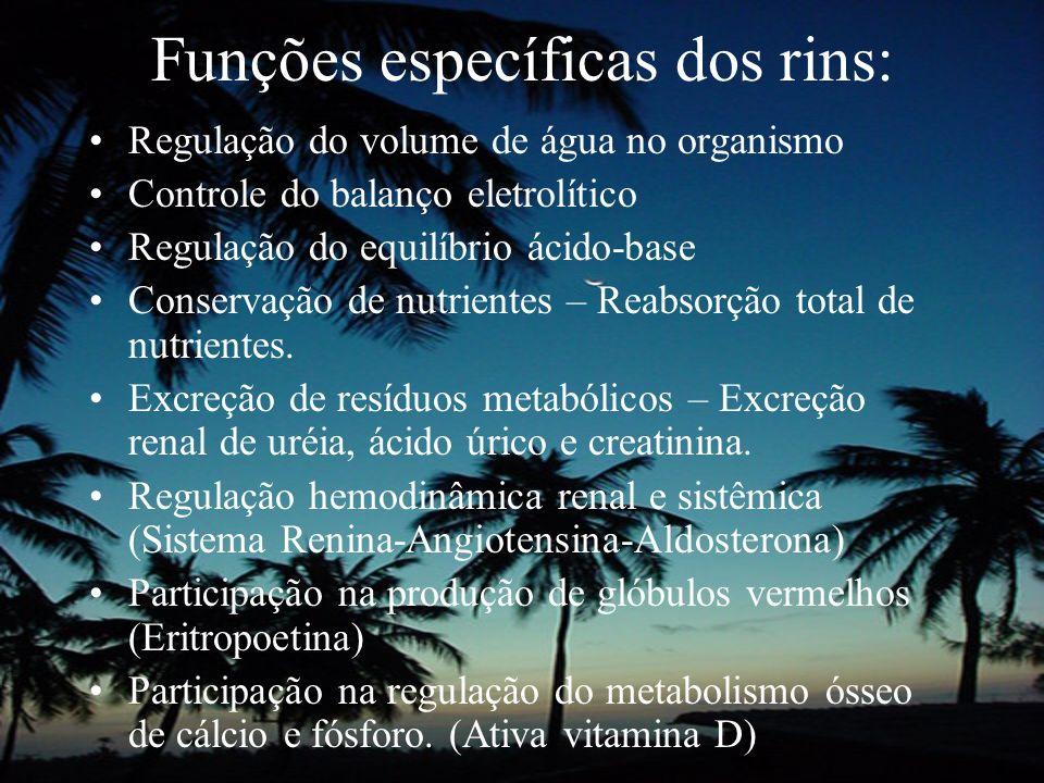 Funções específicas dos rins: Regulação do volume de água no organismo Controle do balanço eletrolítico Regulação do equilíbrio ácido-base Conservação