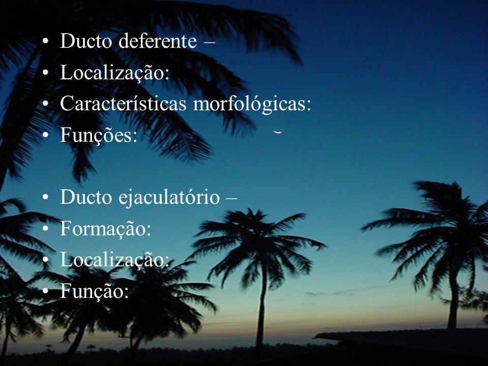 Ducto deferente – Localização: Características morfológicas: Funções: Ducto ejaculatório – Formação: Localização: Função: