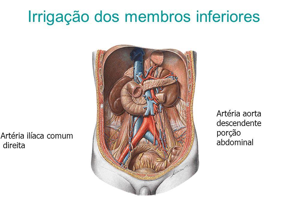 Irrigação dos membros inferiores Artéria aorta descendente porção abdominal Artéria ilíaca comum direita