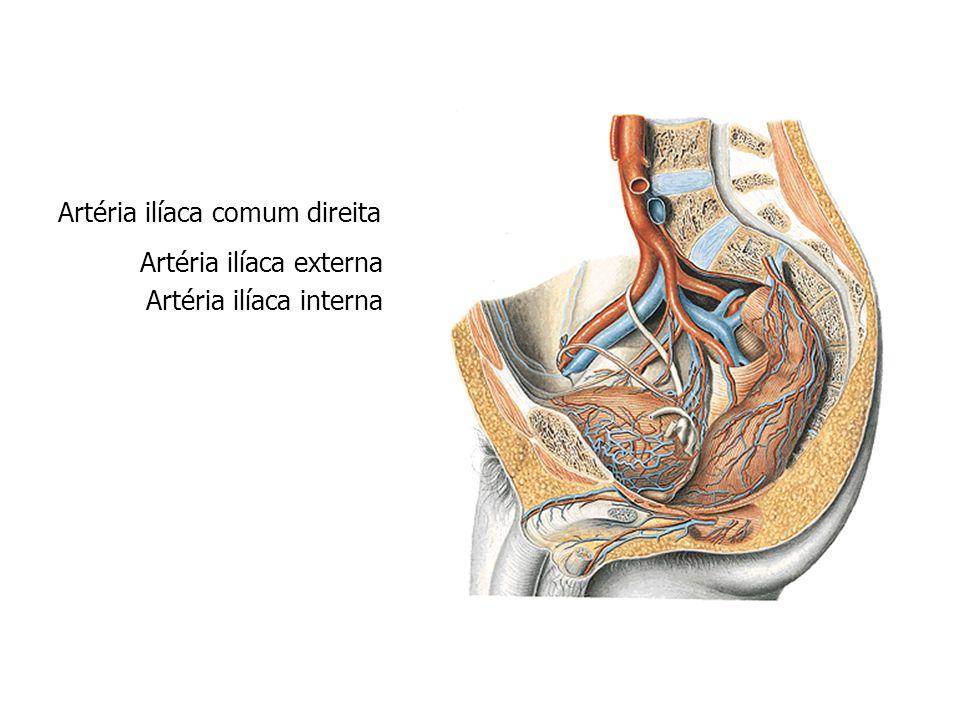 Artéria ilíaca comum direita Artéria ilíaca externa Artéria ilíaca interna