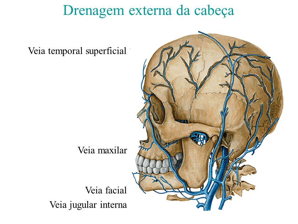 Drenagem externa da cabeça Veia temporal superficial Veia facial Veia maxilar Veia jugular interna V. Jugular externa